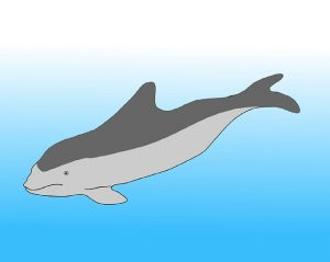Porpoises See Sound Pictures in their Head « Evolution ...